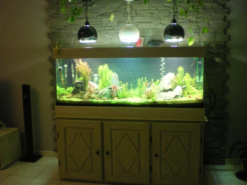 Réfection de mon aquarium  Imgp0910