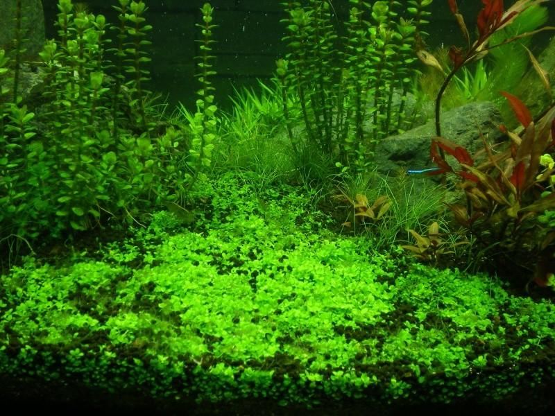 Réfection de mon aquarium  Imgp0911