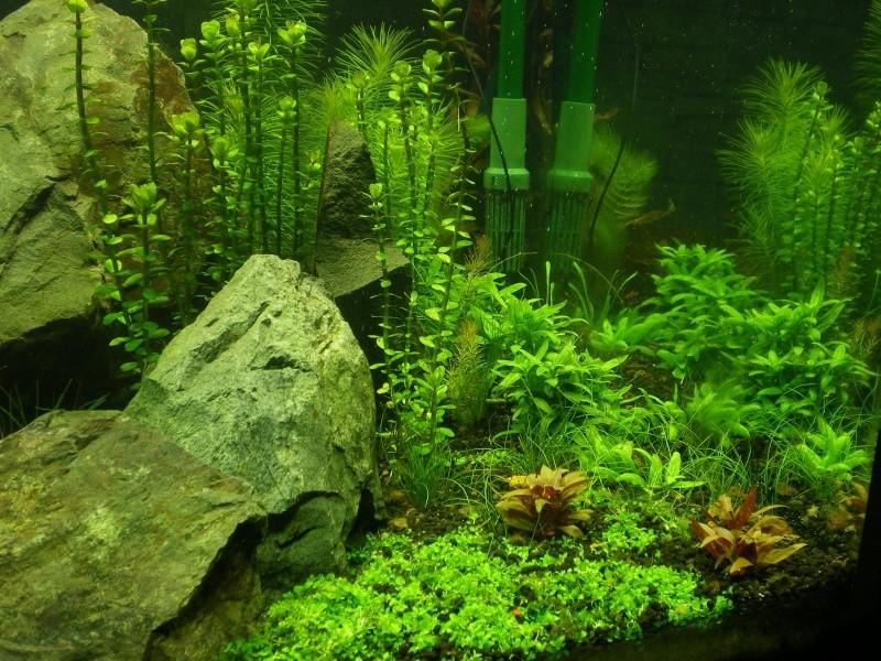 Réfection de mon aquarium  Yty_dr10
