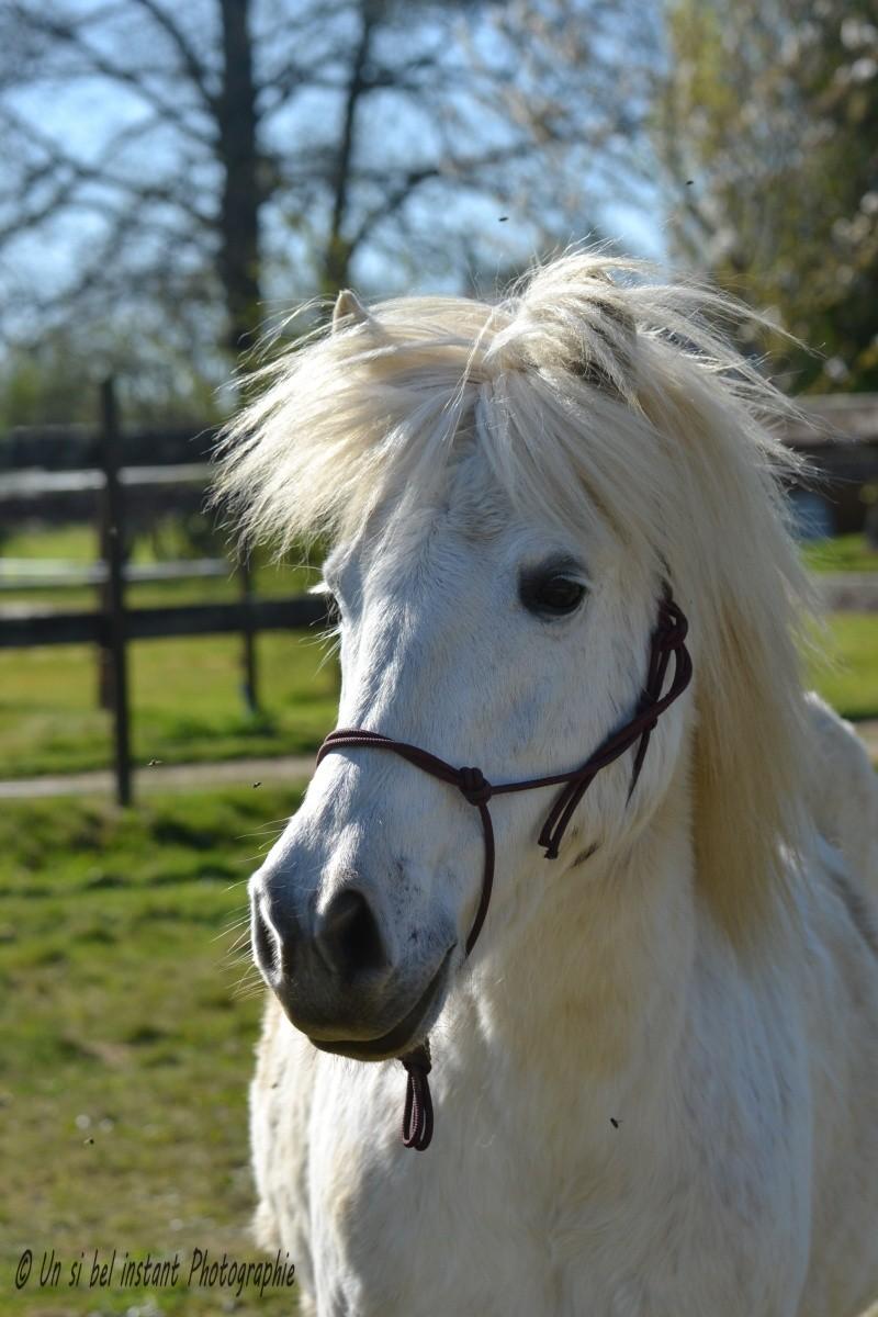 Machu, ancien poney de club Dsc_0410
