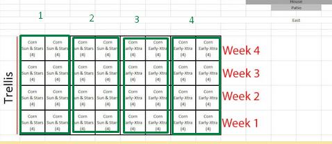 Corn Growing Scree110