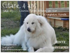 GROSSE URGENCE pour Gitane, femelle type montagne de 4 ans (dept 63) Gitane10