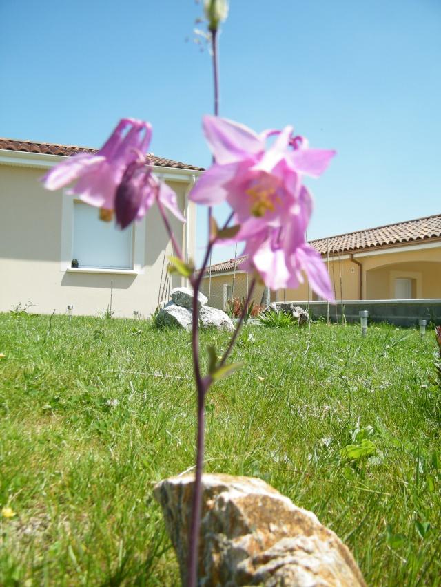 Mon jardin au commencement!  Dscf6257