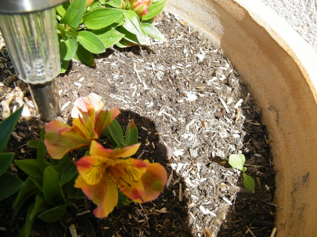 Mon jardin au commencement!  Dscf6258