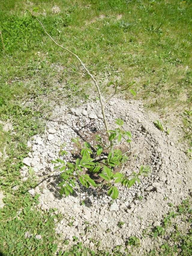Mon jardin au commencement!  Dscf6261