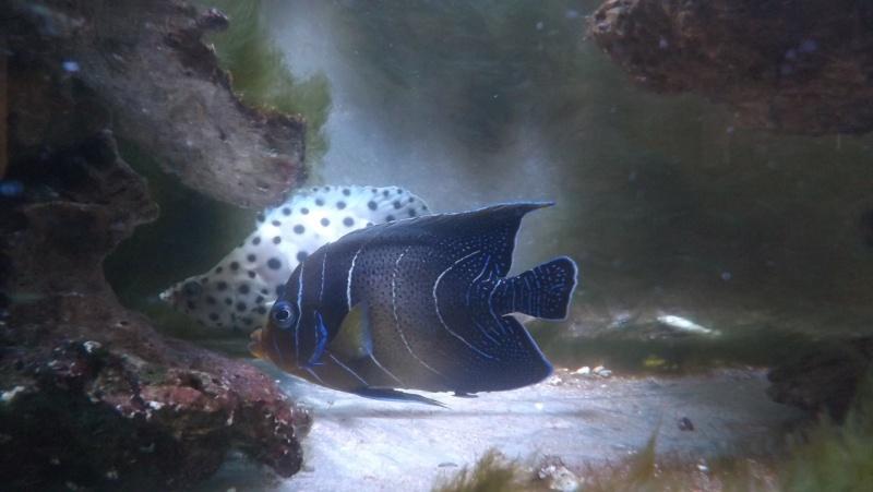 Aquarium de 840 litres recifal, les différentes étapes d'installation Dscf1512