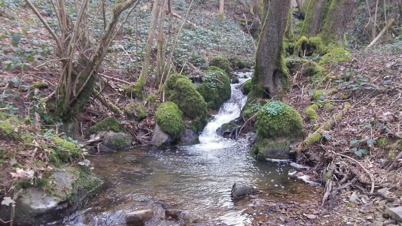 pêche sur un petit ruisseau du beaujolais 105_1311