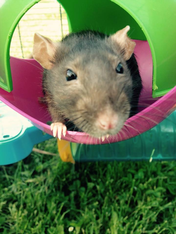 Les rats de Skip' 10420310