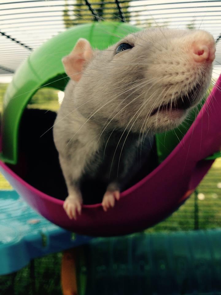 Les rats de Skip' 11053510