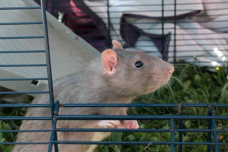 Les rats de Skip' 11149510