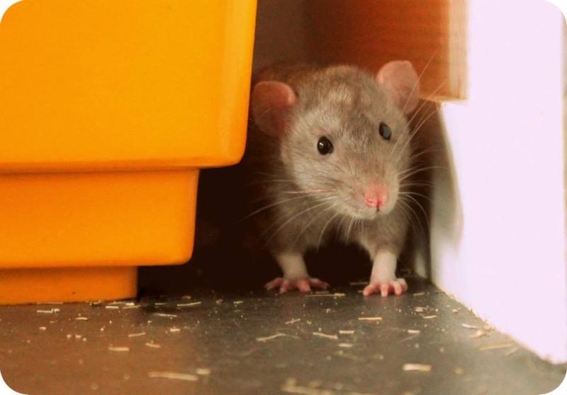 Les rats de Skip' 19706_10