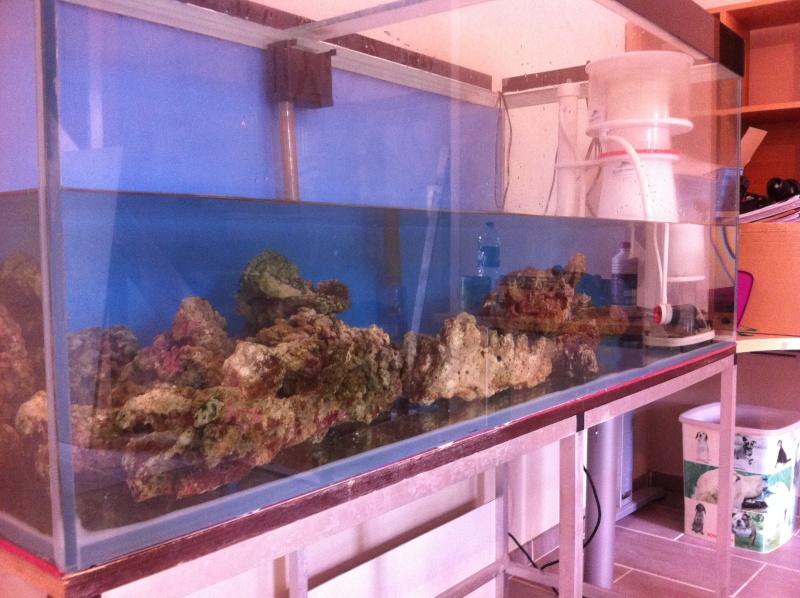 mon reef Img_1210