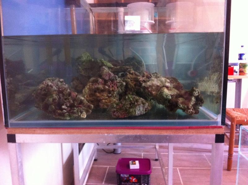 mon reef Img_1211