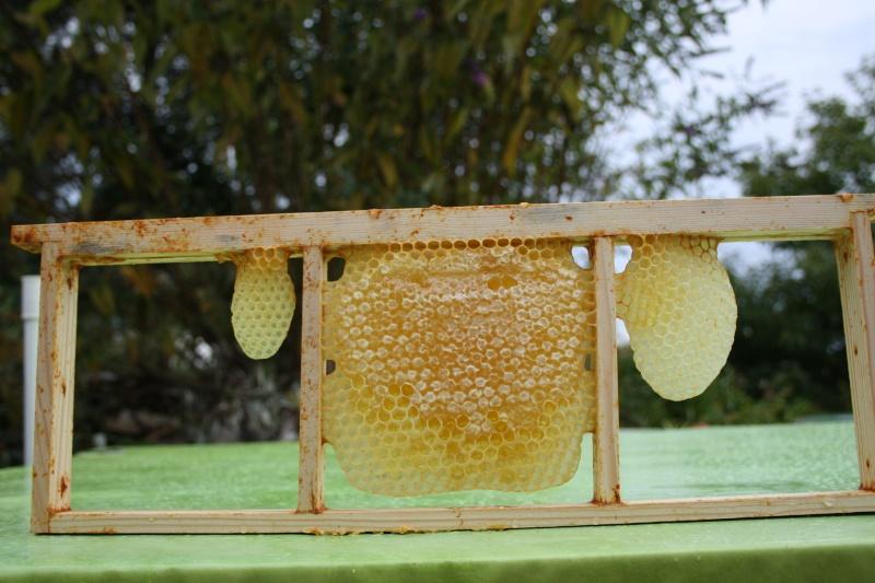 miel en rayon - Page 2 Copie_11
