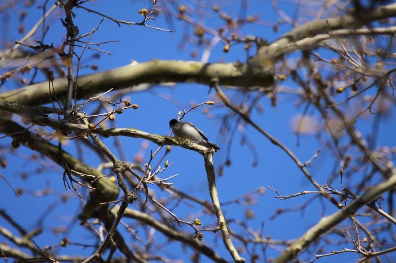besoin d'aide pour un oiseau pris en france dans le sud Img_9210