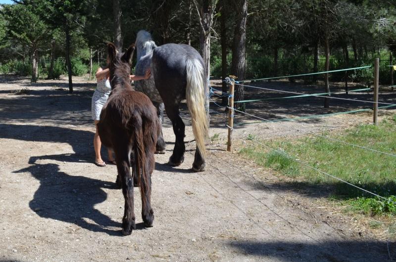 AUGUST - Percheron X Boulonnais né en 2010 - adopté en janvier 2011 par Marianne et Philippe - Page 2 August21