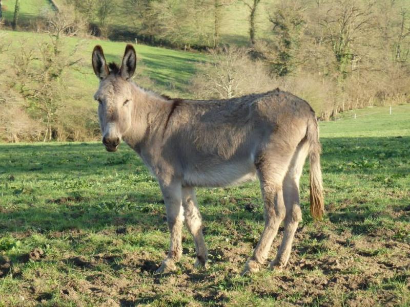 BOURIQUET - ONC âne né en 2009 - adopté en août 2017 par Marie - Page 2 Bouriq12