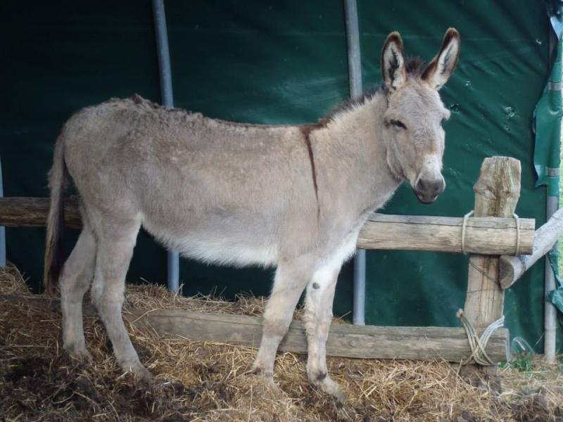 BOURIQUET - ONC âne né en 2009 - adopté en août 2017 par Marie - Page 2 Bouriq13