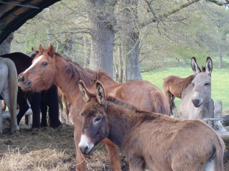 BOURIQUET - ONC âne né en 2009 - adopté en août 2017 par Marie - Page 2 Bouriq14