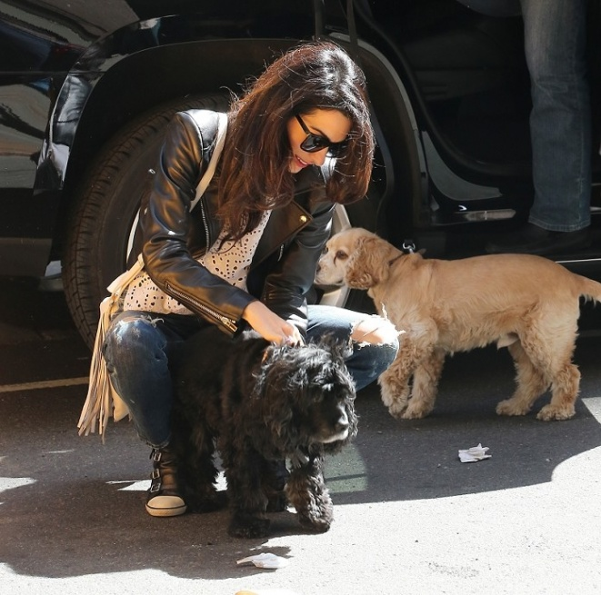 Amal and EINSTEIN!!! (and a blonde pooch) visit George on set, 4-12-15 - Page 2 Qq510