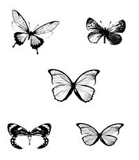 Les voici :) Papill11
