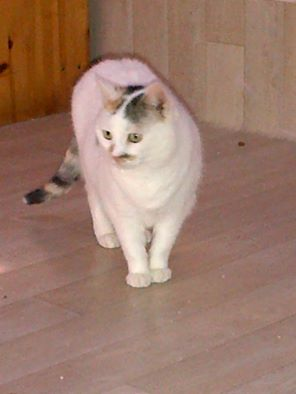 ATHENA (2003) blanche tricolore Athena10