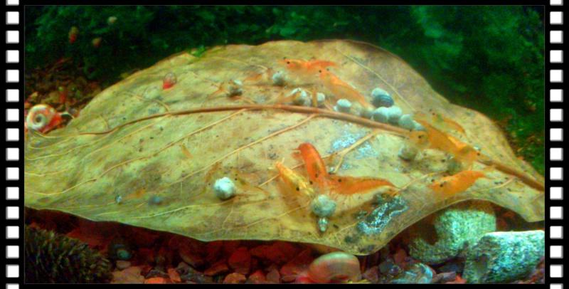 Gozgull Shrimp's - Page 8 Img_2032