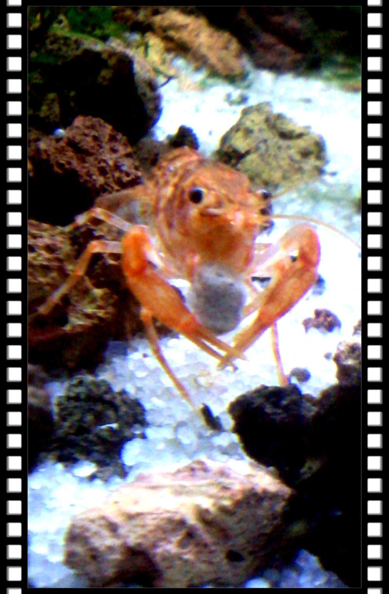 Gozgull Shrimp's - Page 8 Img_2033