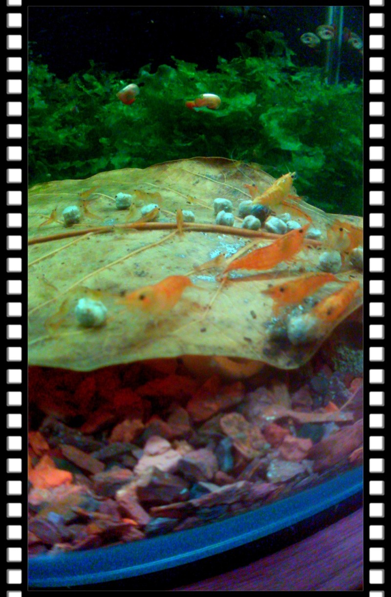 Gozgull Shrimp's - Page 8 Img_2034