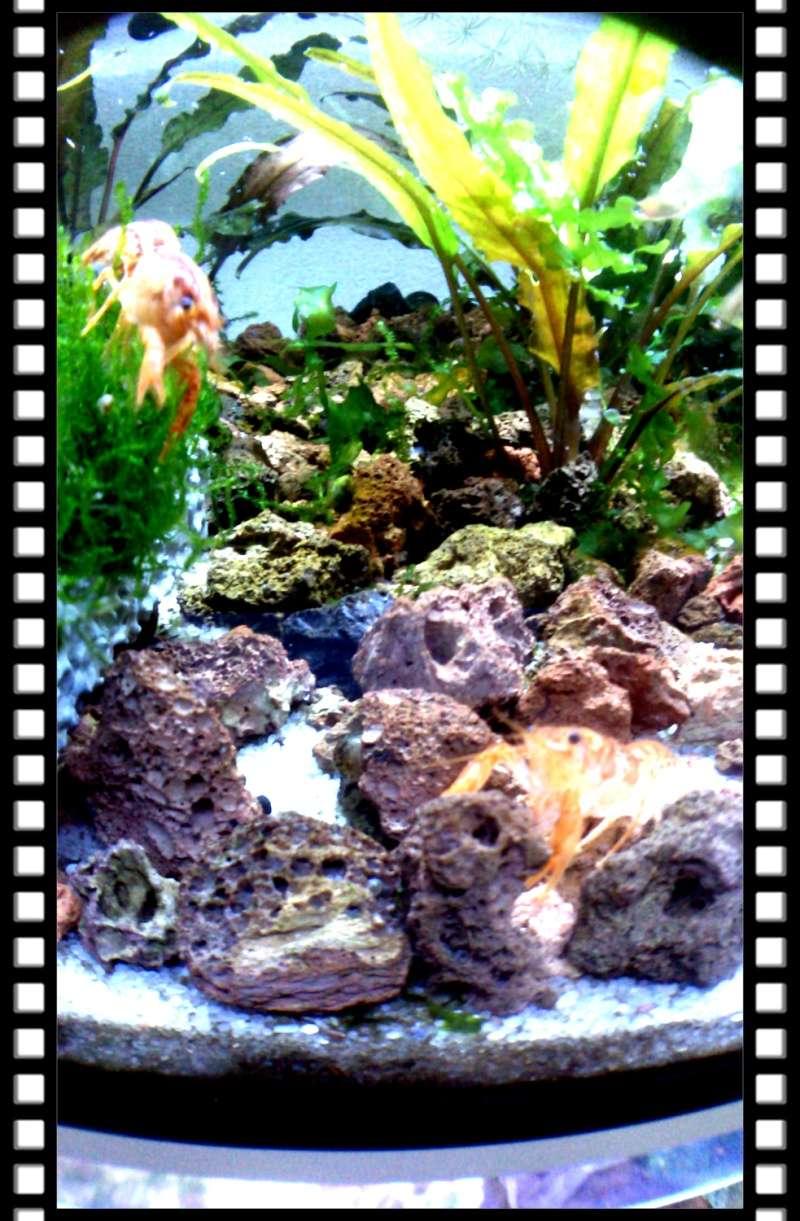 Gozgull Shrimp's - Page 8 Img_2035