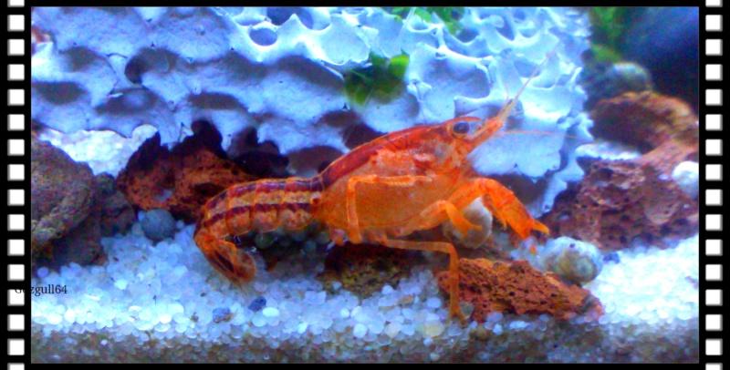 Gozgull Shrimp's - Page 8 Img_2036