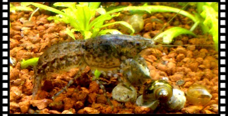 Gozgull Shrimp's - Page 8 Img_2040