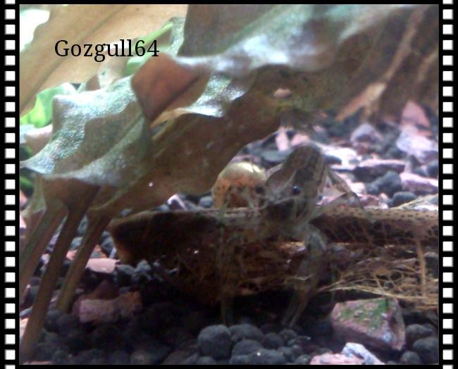 Gozgull Shrimp's - Page 8 Img_2041