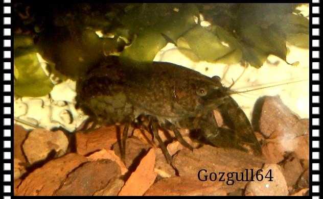 Gozgull Shrimp's - Page 8 Img_2042