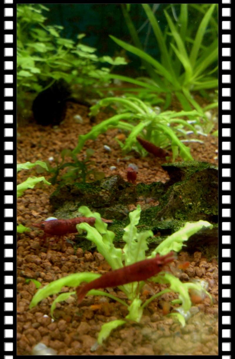 Gozgull Shrimp's - Page 8 Img_2043