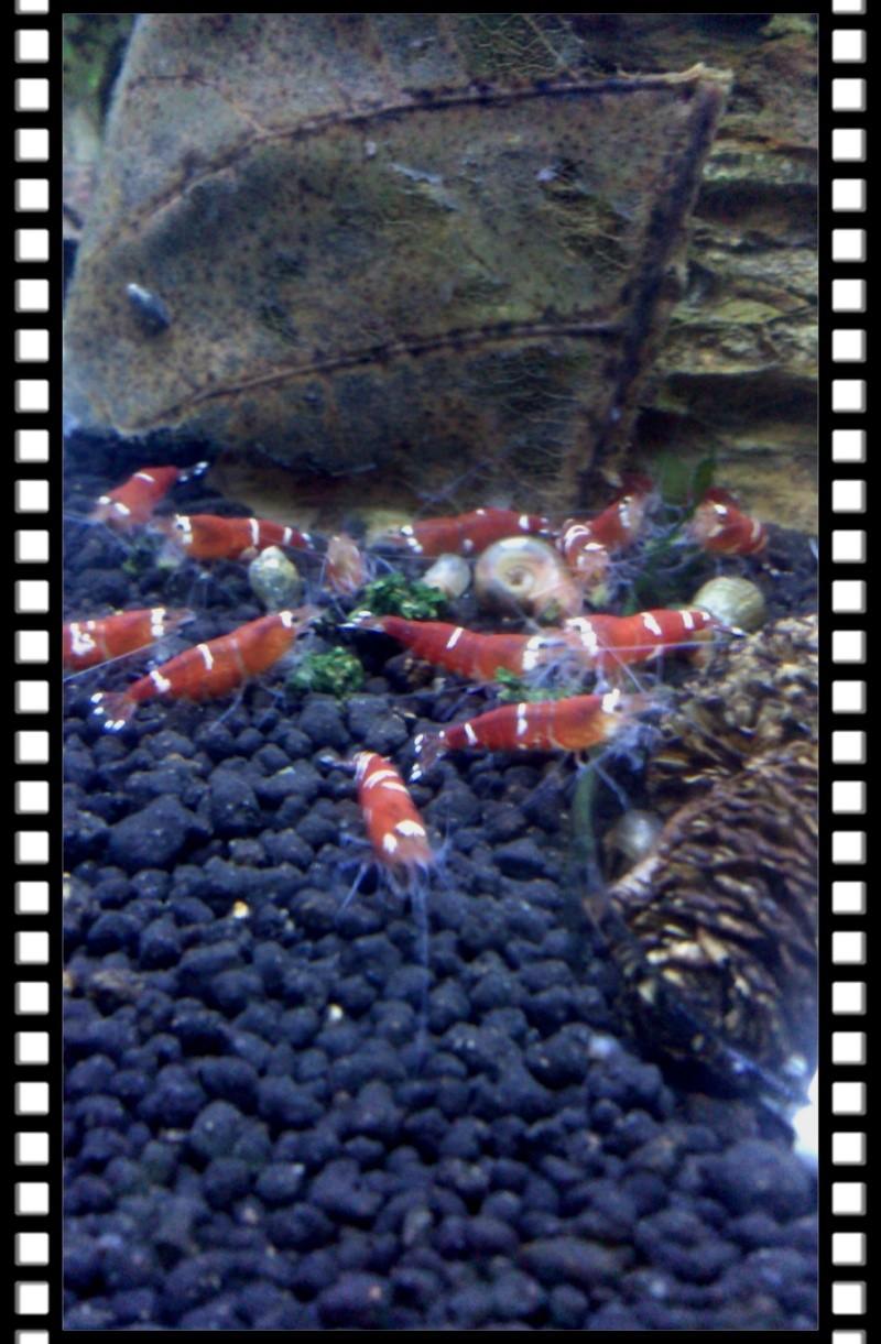 Gozgull Shrimp's - Page 8 Img_2044