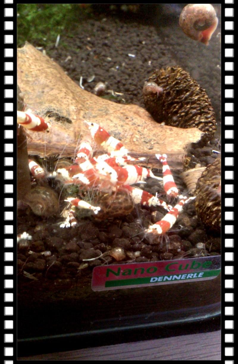 Gozgull Shrimp's - Page 8 Img_2048