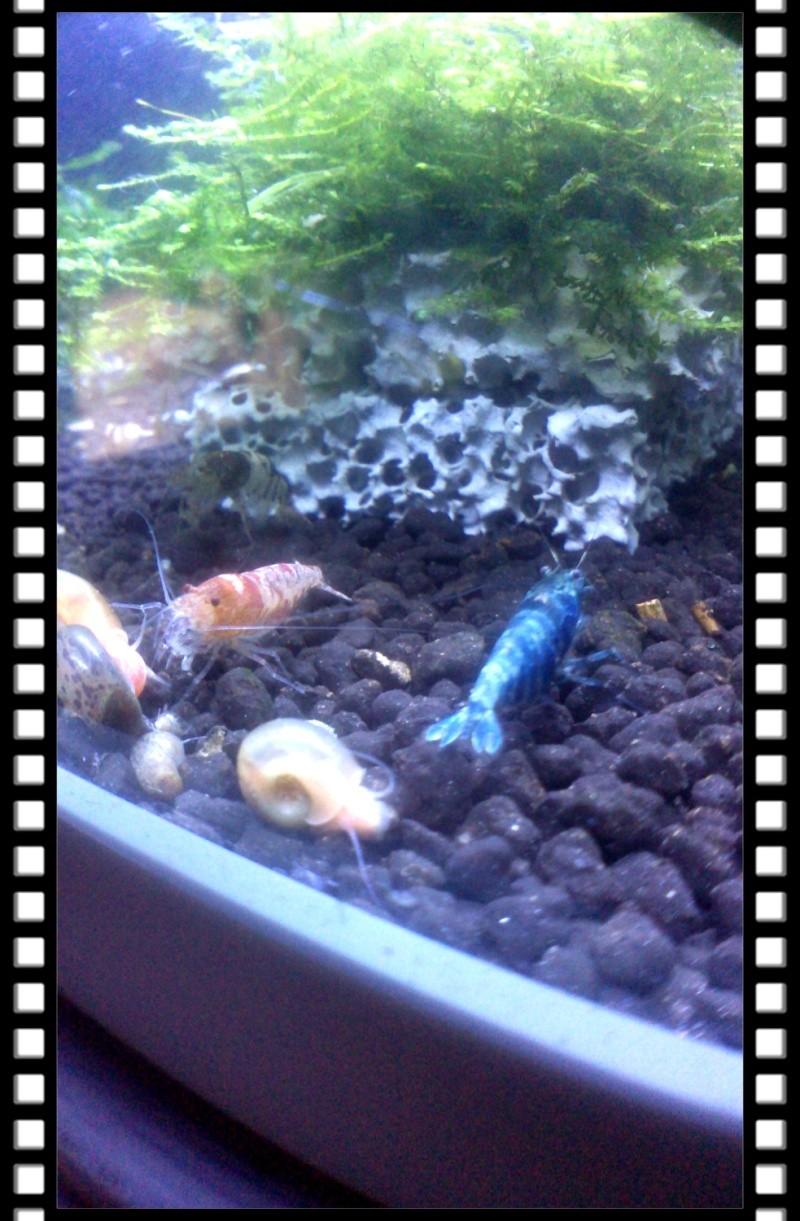 Gozgull Shrimp's - Page 8 Img_2049