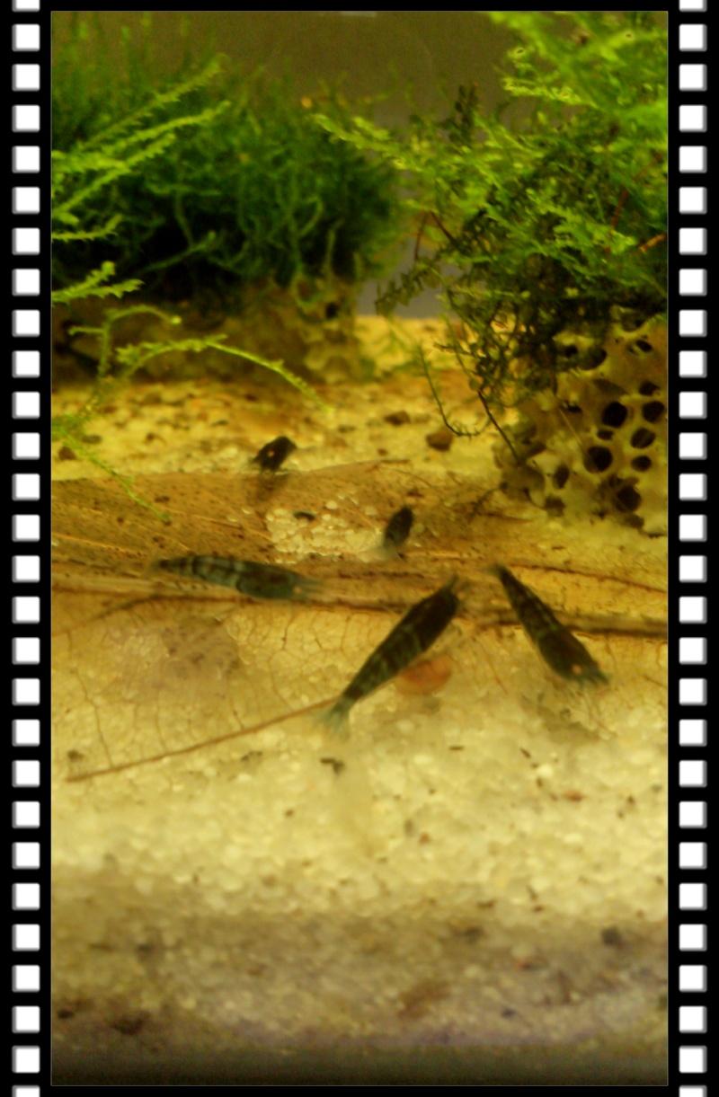 Gozgull Shrimp's - Page 8 Img_2050