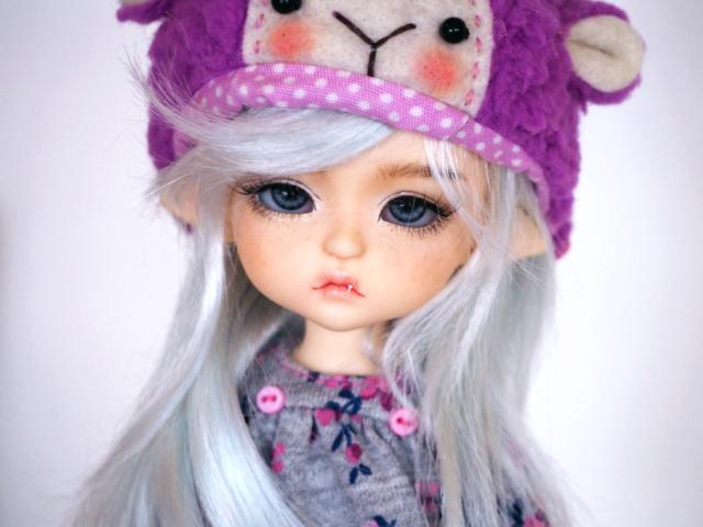 V/E~Lyseria~Giorria~LY LEA & Elly~Cocoriang RCH Lillycat Lea_ly10