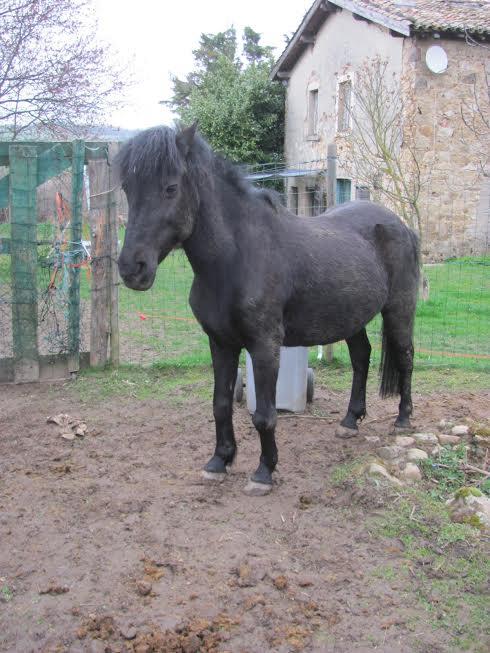 CHARLIE - ONC poney née en 1999 - adoptée en janvier 2013 par mammiemitsou - Page 3 Unname30