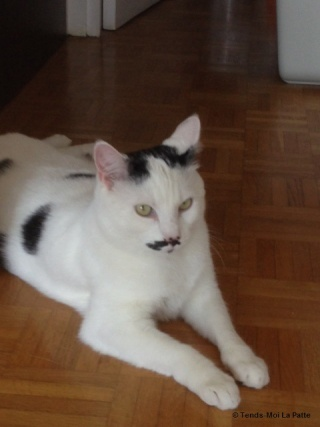 CHAT A ADOPTER : HALLY - chat mâle de 5 ans Img_1112
