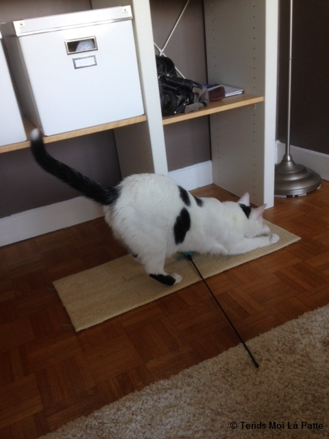 CHAT A ADOPTER : HALLY - chat mâle de 5 ans Img_1113