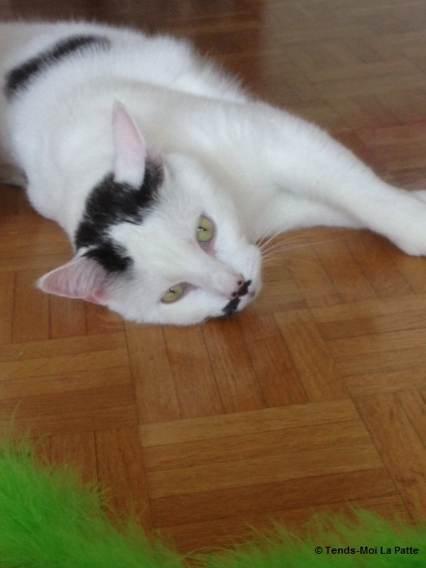 CHAT A ADOPTER : HALLY - chat mâle de 5 ans Img_1114