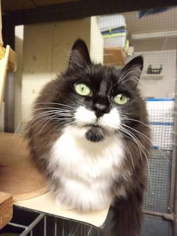 dating la cerere dl whiskers