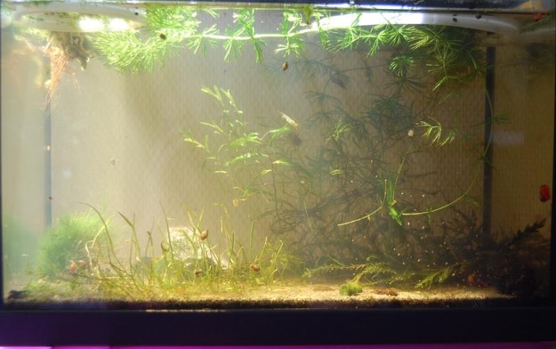Nano 13 litres aselles et sp green Bac_110
