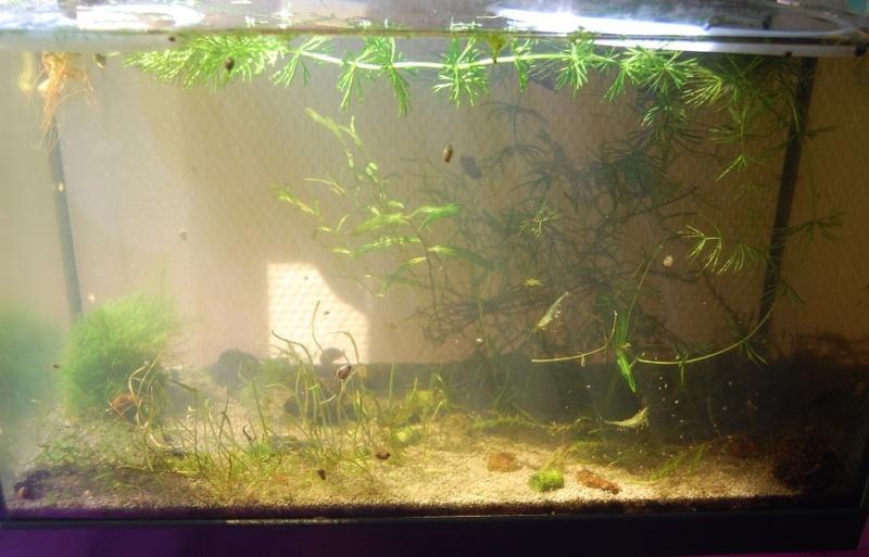 Nano 13 litres aselles et sp green Bac_310