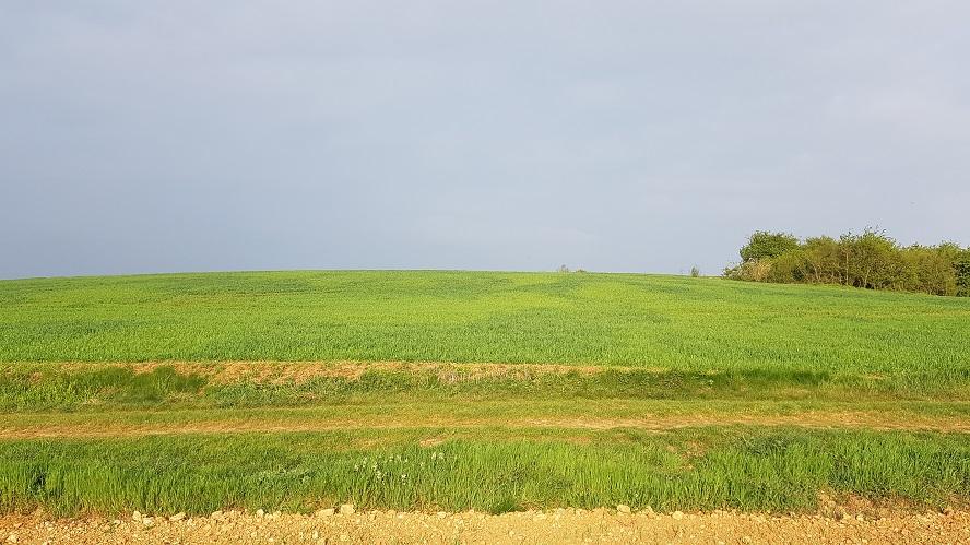 Suivi des blés 2020 - Page 3 0270