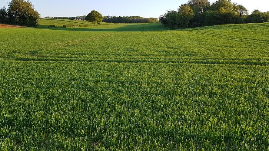 Suivi des blés 2020 - Page 4 0330