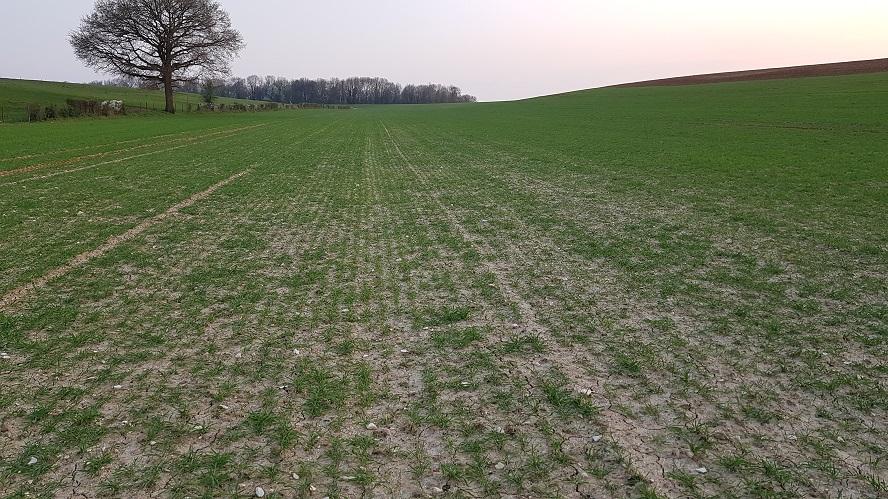 Suivi des blés 2020 - Page 2 0512